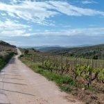 weg in weinberg, montsant, katalonien, spanien